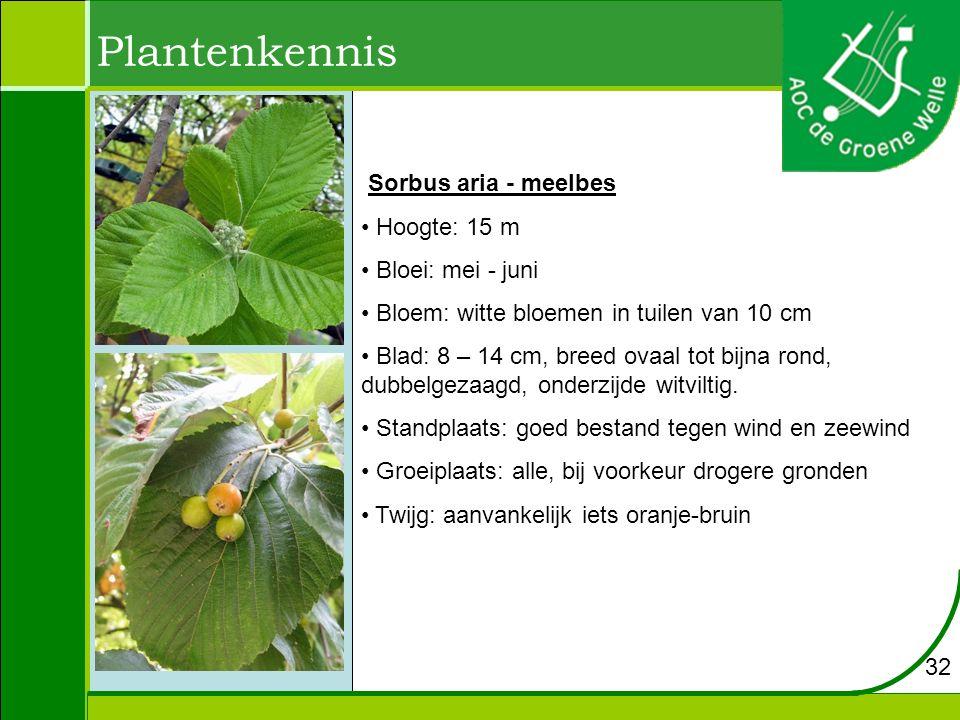 Plantenkennis Sorbus aria - meelbes Hoogte: 15 m Bloei: mei - juni Bloem: witte bloemen in tuilen van 10 cm Blad: 8 – 14 cm, breed ovaal tot bijna rond, dubbelgezaagd, onderzijde witviltig.