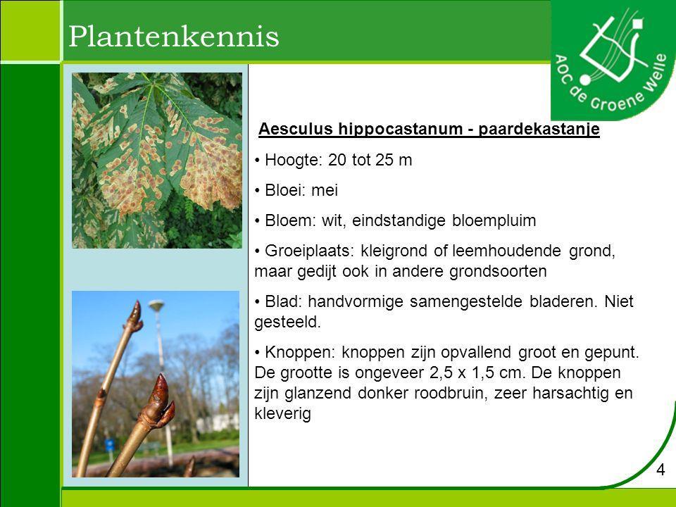 Aesculus hippocastanum - paardekastanje Hoogte: 20 tot 25 m Bloei: mei Bloem: wit, eindstandige bloempluim Groeiplaats: kleigrond of leemhoudende gron