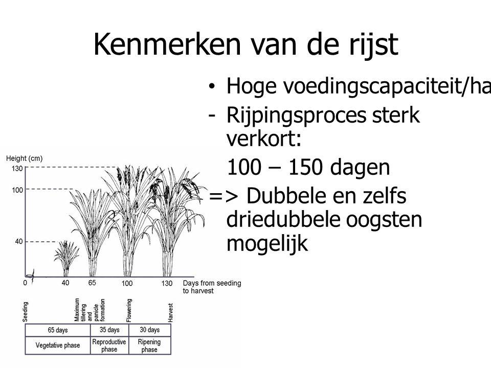 Kenmerken van de rijst Hoge voedingscapaciteit/ha -Rijpingsproces sterk verkort: 100 – 150 dagen => Dubbele en zelfs driedubbele oogsten mogelijk