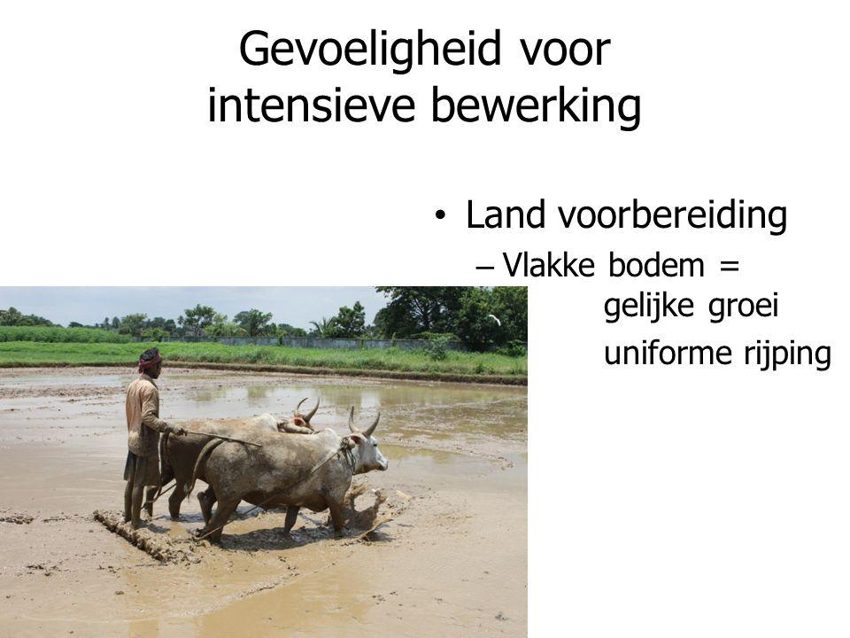 Gevoeligheid voor intensieve bewerking Land voorbereiding – Vlakke bodem = gelijke groei uniforme rijping