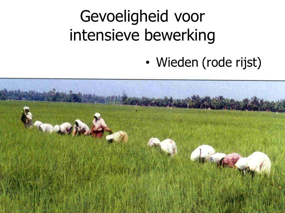 Gevoeligheid voor intensieve bewerking Wieden (rode rijst)