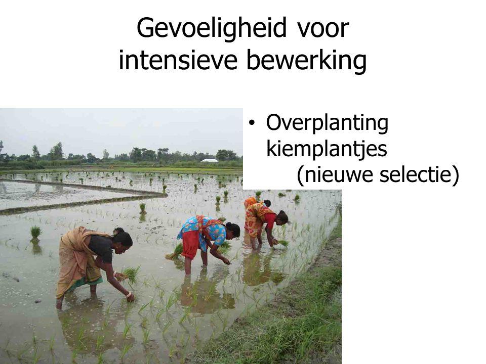 Gevoeligheid voor intensieve bewerking Overplanting kiemplantjes (nieuwe selectie)