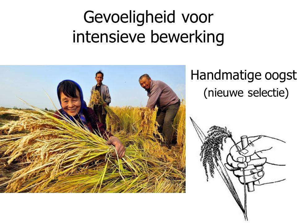 Gevoeligheid voor intensieve bewerking Handmatige oogst (nieuwe selectie)