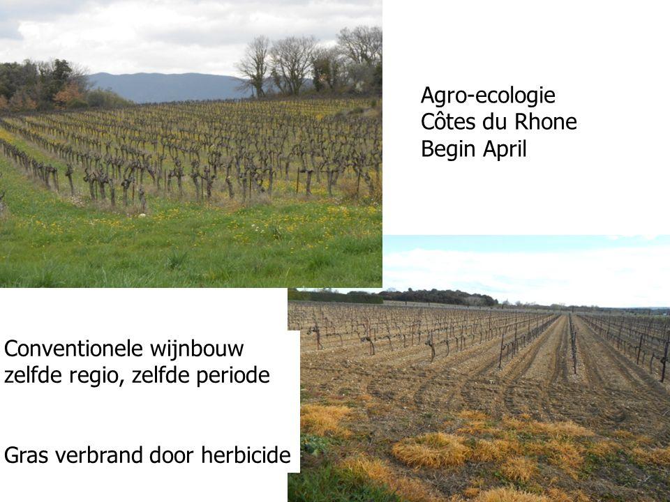 Agro-ecologie Côtes du Rhone Begin April Conventionele wijnbouw zelfde regio, zelfde periode Gras verbrand door herbicide
