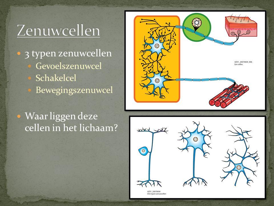 3 typen zenuwcellen Gevoelszenuwcel Schakelcel Bewegingszenuwcel Waar liggen deze cellen in het lichaam?