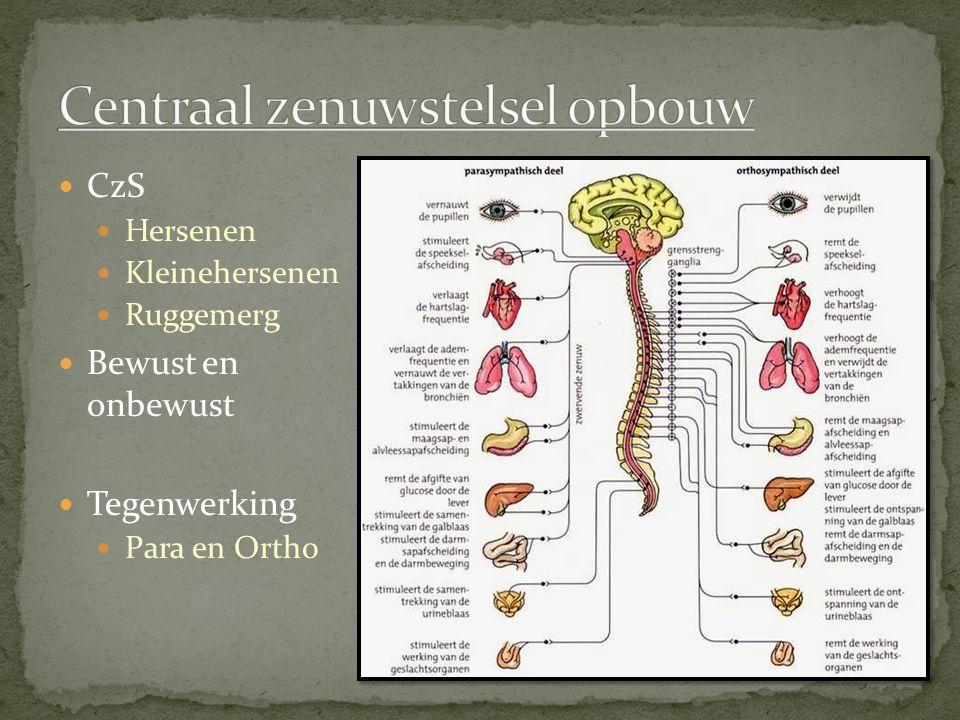 CzS Hersenen Kleinehersenen Ruggemerg Bewust en onbewust Tegenwerking Para en Ortho