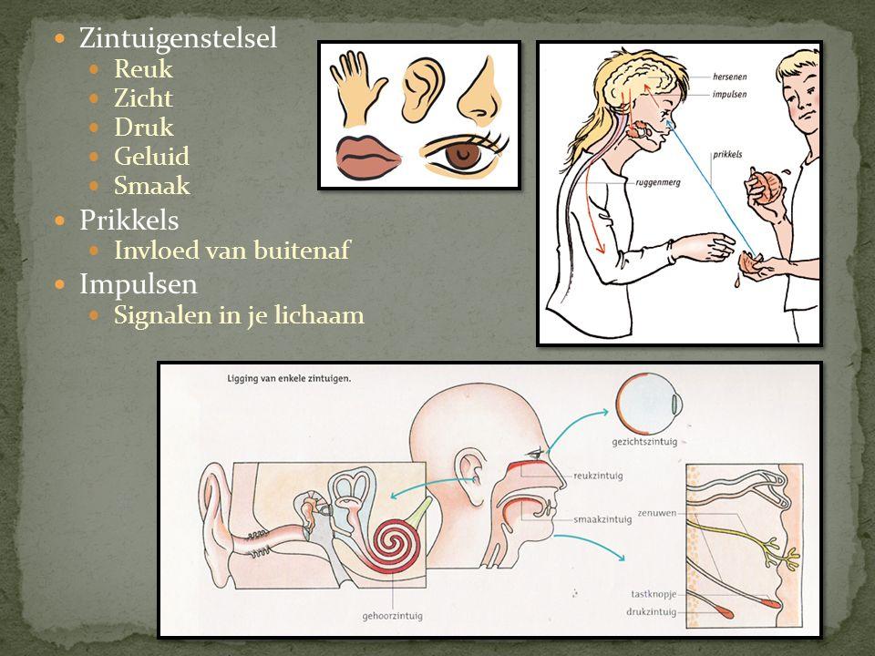 Zintuigenstelsel Reuk Zicht Druk Geluid Smaak Prikkels Invloed van buitenaf Impulsen Signalen in je lichaam