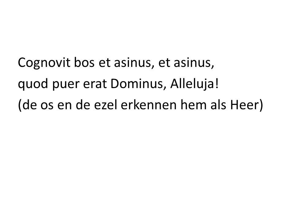Cognovit bos et asinus, et asinus, quod puer erat Dominus, Alleluja! (de os en de ezel erkennen hem als Heer)