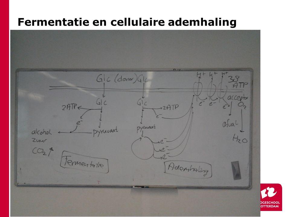 Fermentatie en cellulaire ademhaling
