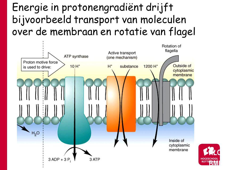 Energie in protonengradiënt drijft bijvoorbeeld transport van moleculen over de membraan en rotatie van flagel HLO BML