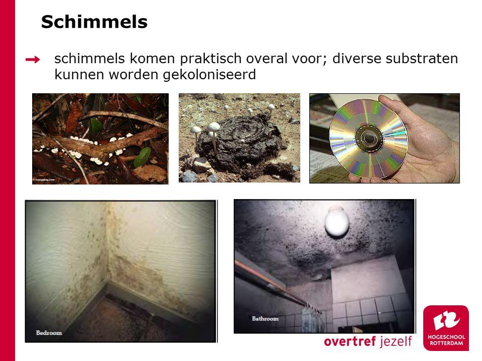 Schimmels schimmels komen praktisch overal voor; diverse substraten kunnen worden gekoloniseerd