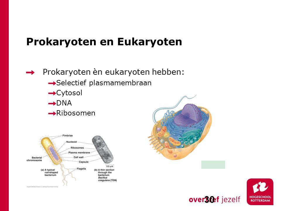 Prokaryoten en Eukaryoten Prokaryoten èn eukaryoten hebben: Selectief plasmamembraan Cytosol DNA Ribosomen 30