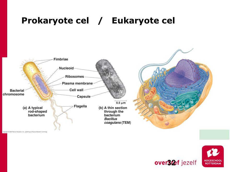 Prokaryote cel / Eukaryote cel 32