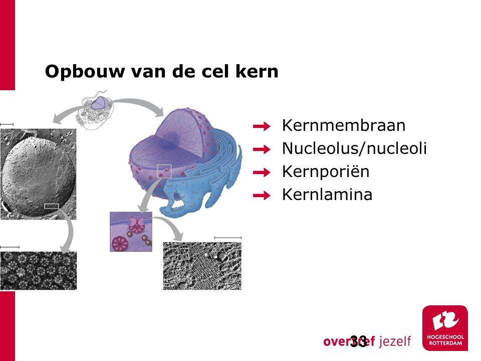 Opbouw van de cel kern Kernmembraan Nucleolus/nucleoli Kernporiën Kernlamina 33