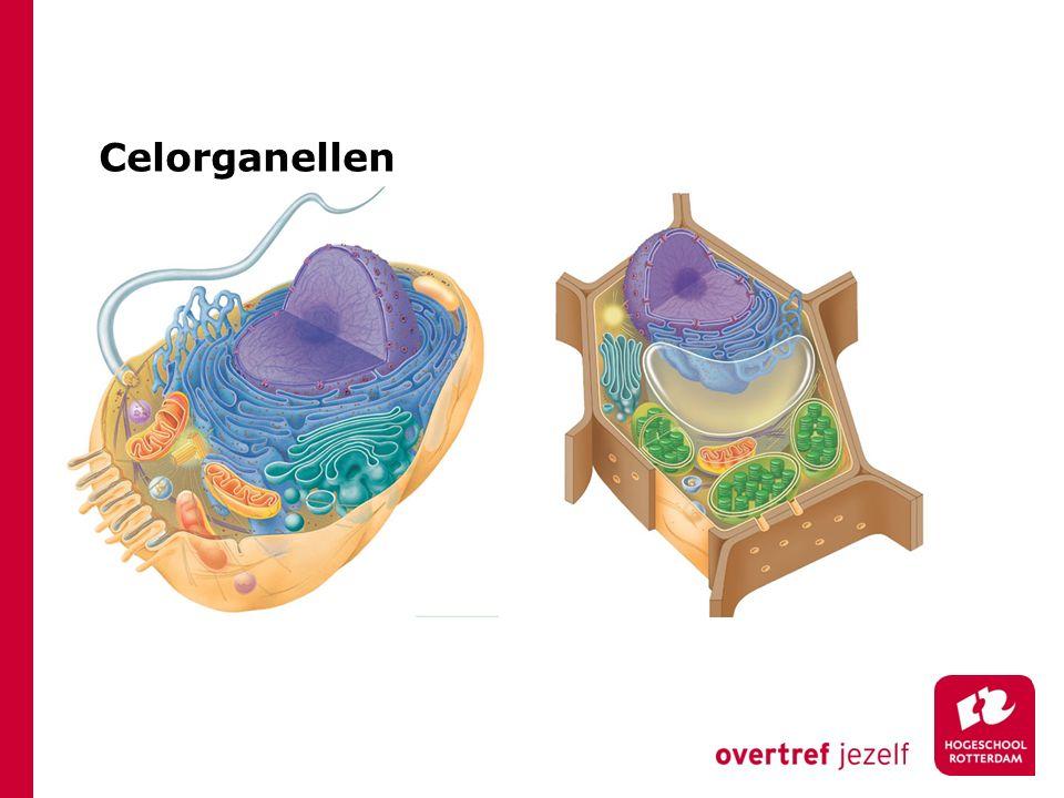 Celorganellen