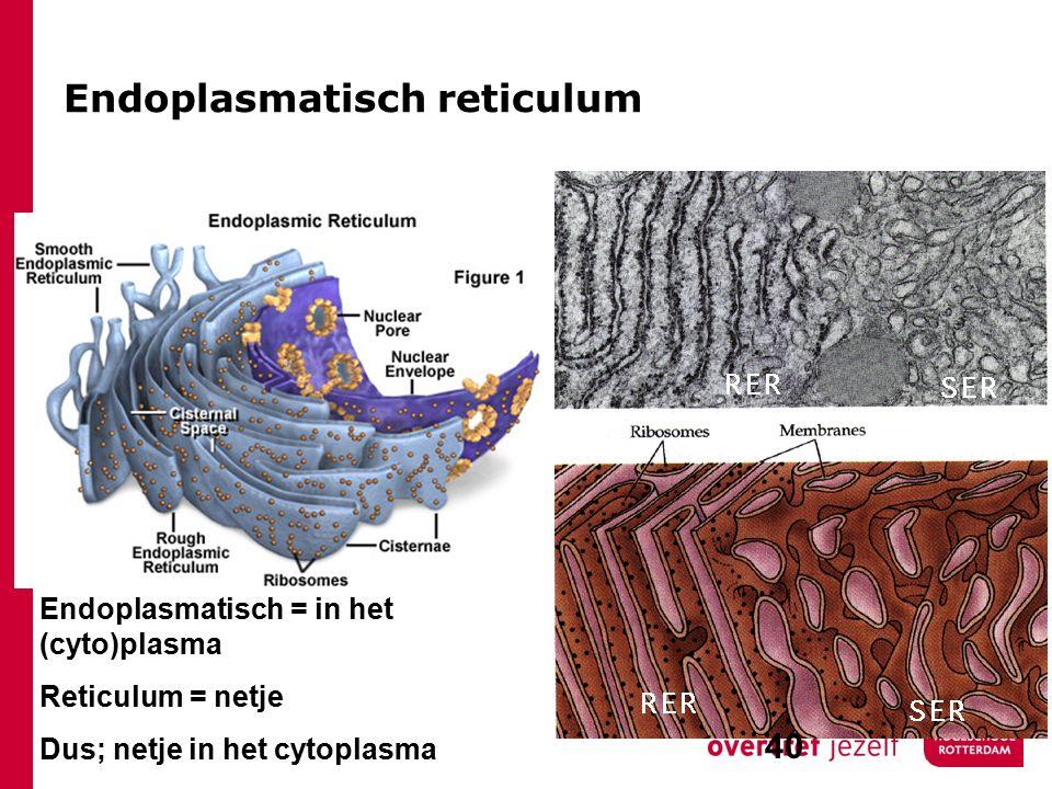 Endoplasmatisch reticulum Endoplasmatisch = in het (cyto)plasma Reticulum = netje Dus; netje in het cytoplasma 40
