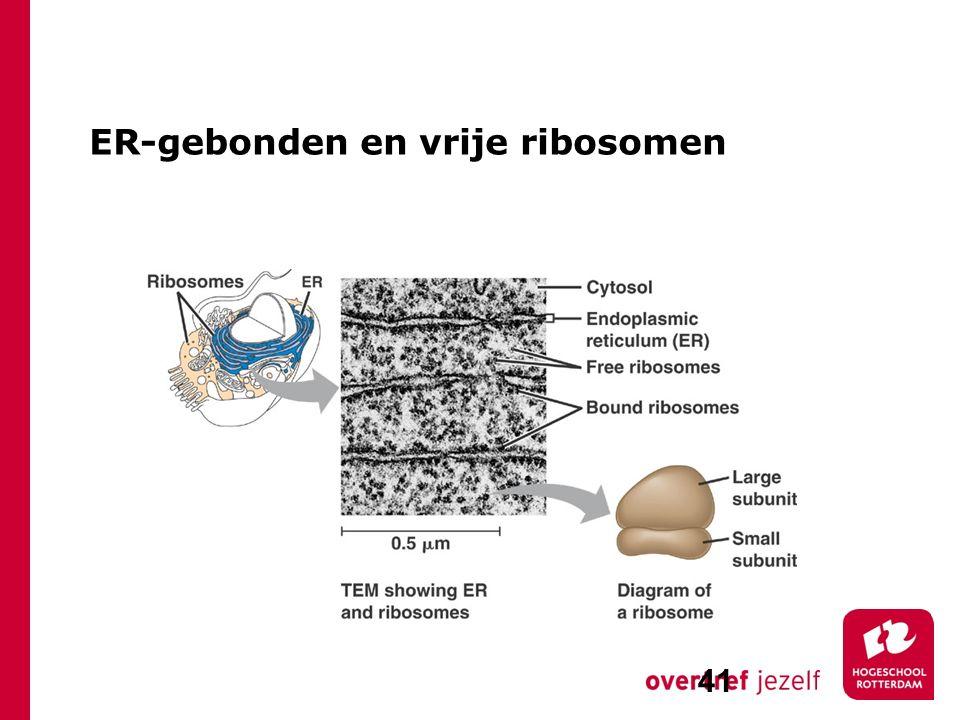 ER-gebonden en vrije ribosomen 41