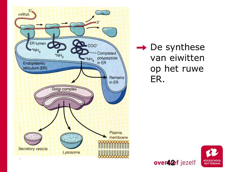 De synthese van eiwitten op het ruwe ER. 42