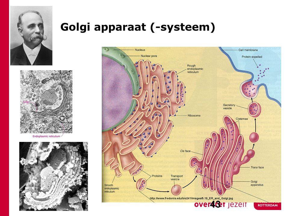Golgi apparaat (-systeem) 43
