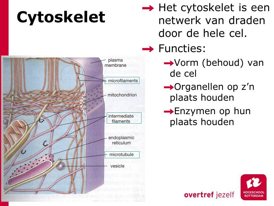 Cytoskelet Het cytoskelet is een netwerk van draden door de hele cel. Functies: Vorm (behoud) van de cel Organellen op z'n plaats houden Enzymen op hu