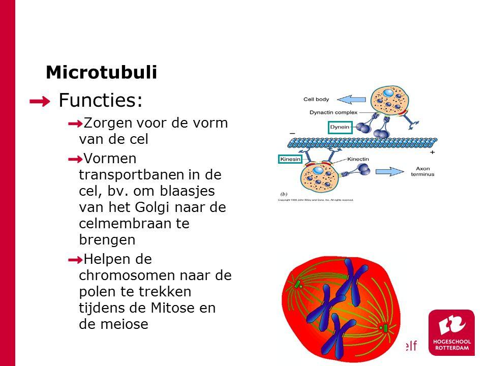 Microtubuli Functies: Zorgen voor de vorm van de cel Vormen transportbanen in de cel, bv. om blaasjes van het Golgi naar de celmembraan te brengen Hel