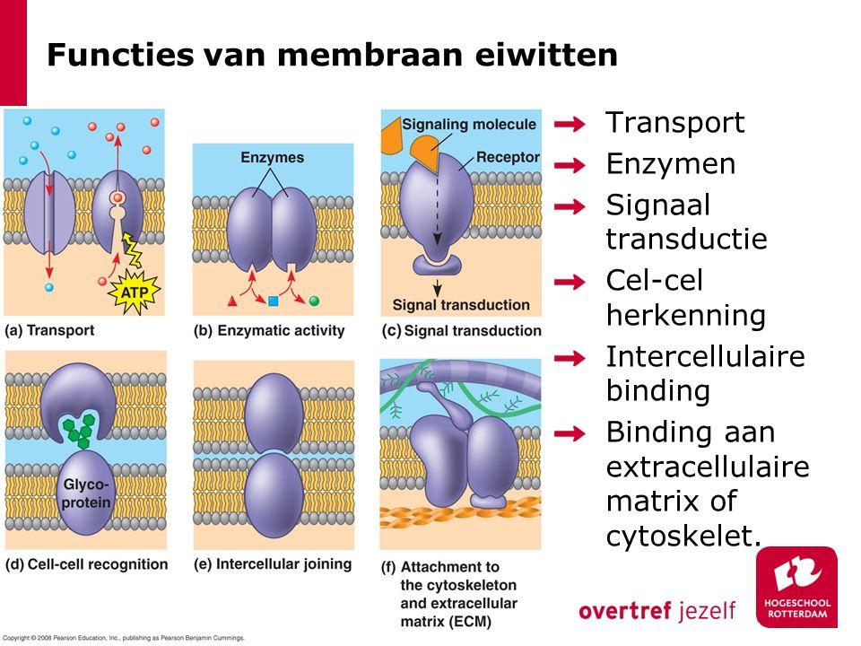 Functies van membraan eiwitten Transport Enzymen Signaal transductie Cel-cel herkenning Intercellulaire binding Binding aan extracellulaire matrix of