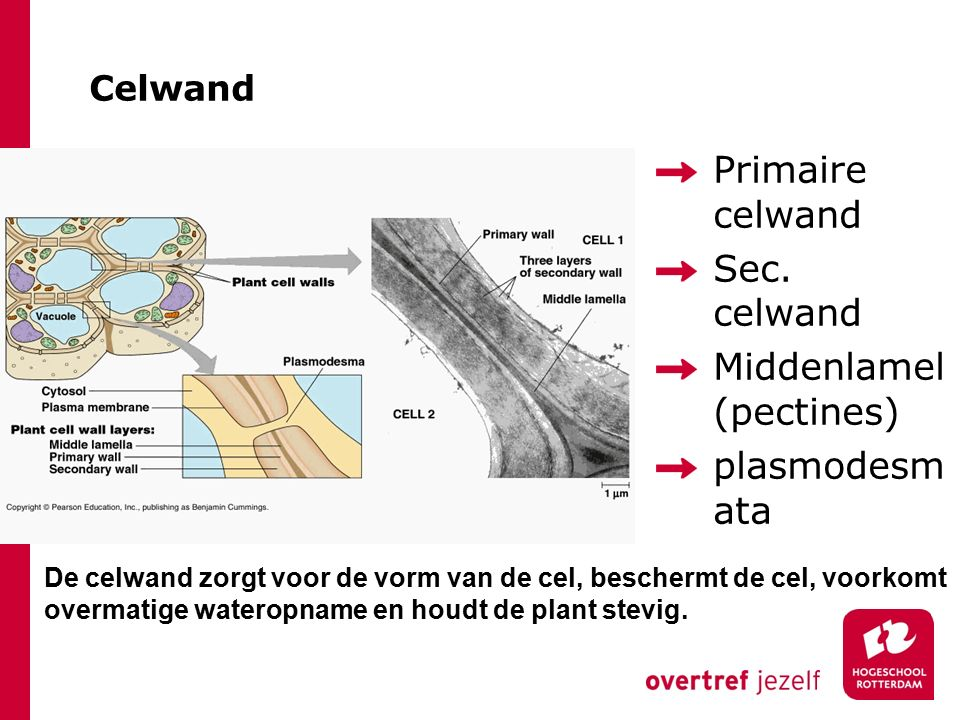 Celwand Primaire celwand Sec.