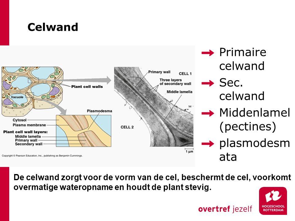 Celwand Primaire celwand Sec. celwand Middenlamel (pectines) plasmodesm ata De celwand zorgt voor de vorm van de cel, beschermt de cel, voorkomt overm