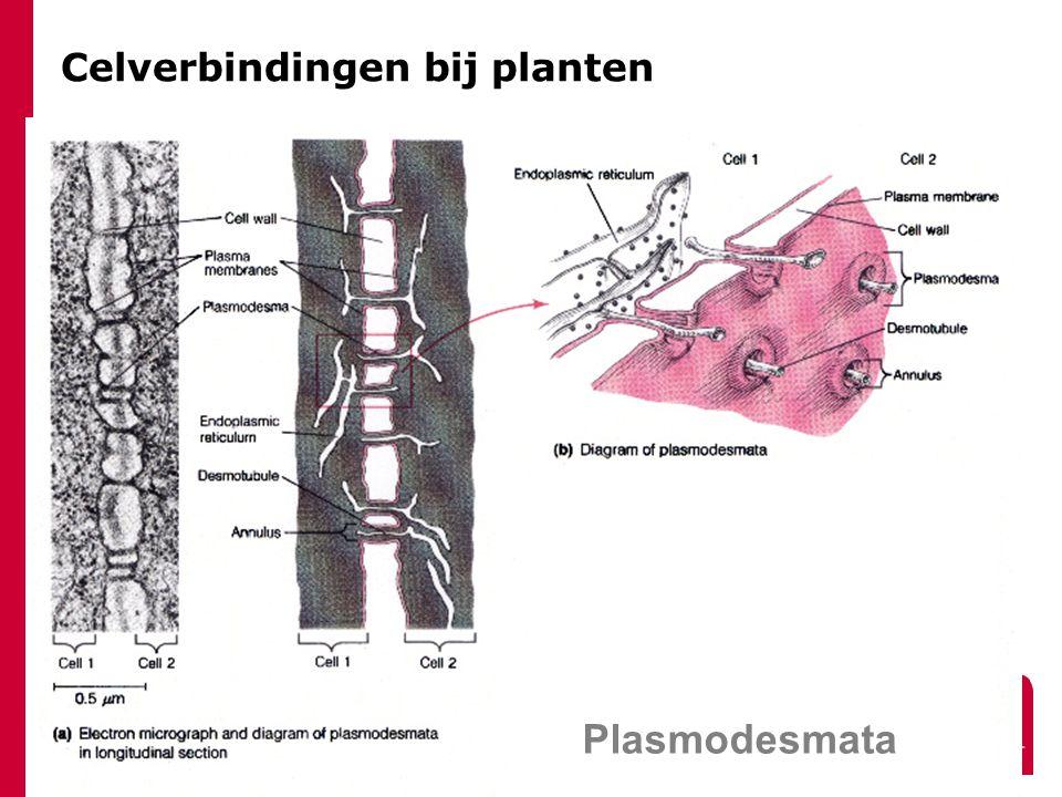 Celverbindingen bij planten Plasmodesmata