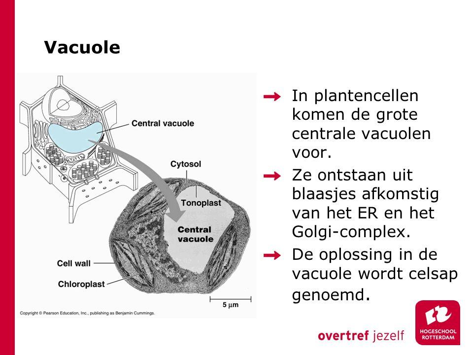 Vacuole In plantencellen komen de grote centrale vacuolen voor. Ze ontstaan uit blaasjes afkomstig van het ER en het Golgi-complex. De oplossing in de