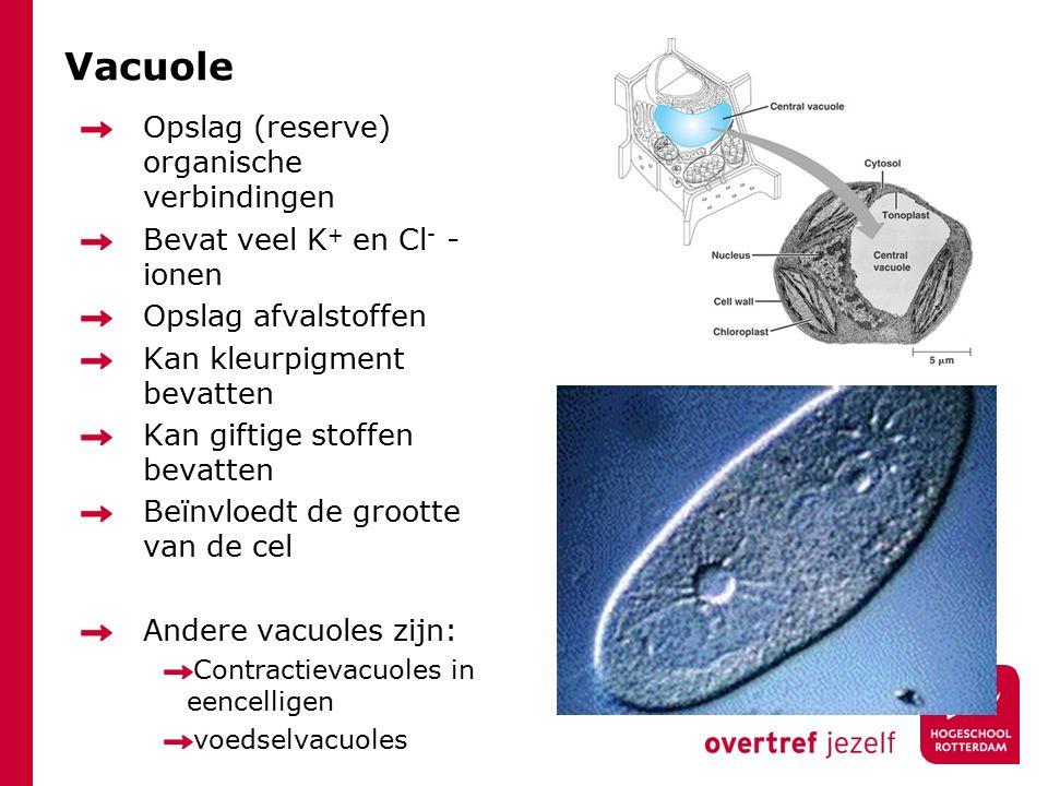 Vacuole Opslag (reserve) organische verbindingen Bevat veel K + en Cl - - ionen Opslag afvalstoffen Kan kleurpigment bevatten Kan giftige stoffen bevatten Beïnvloedt de grootte van de cel Andere vacuoles zijn: Contractievacuoles in eencelligen voedselvacuoles