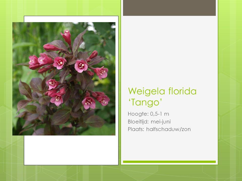Weigela florida 'Tango' Hoogte: 0,5-1 m Bloeitijd: mei-juni Plaats: halfschaduw/zon