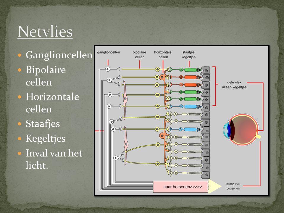 Ganglioncellen Bipolaire cellen Horizontale cellen Staafjes Kegeltjes Inval van het licht.