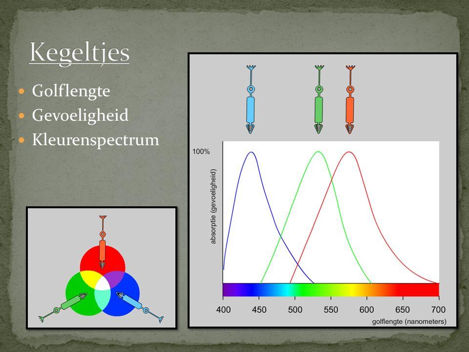 Golflengte Gevoeligheid Kleurenspectrum