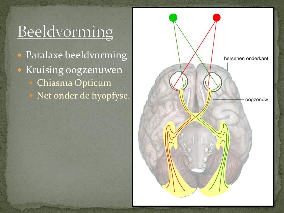 Paralaxe beeldvorming Kruising oogzenuwen Chiasma Opticum Net onder de hyopfyse.