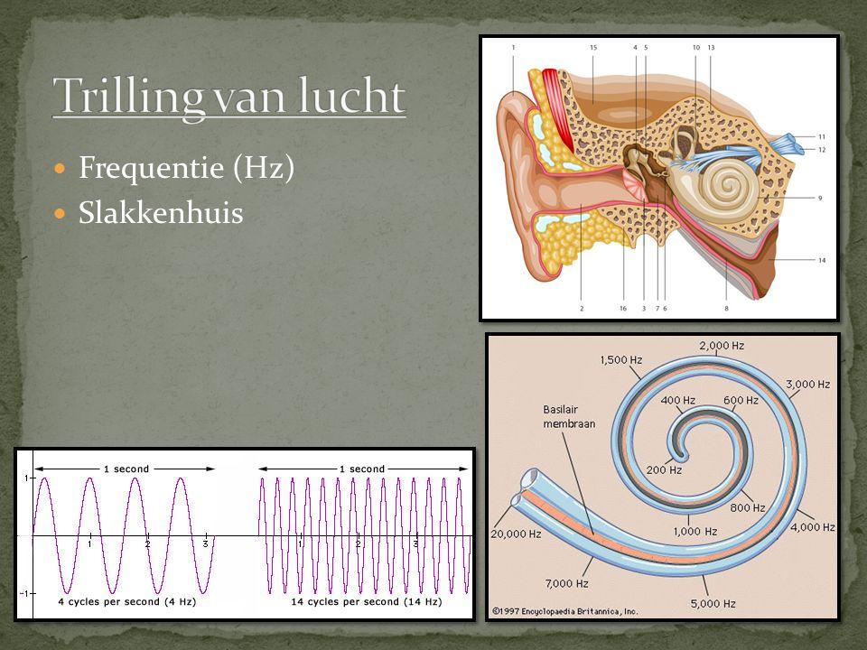 Frequentie (Hz) Slakkenhuis