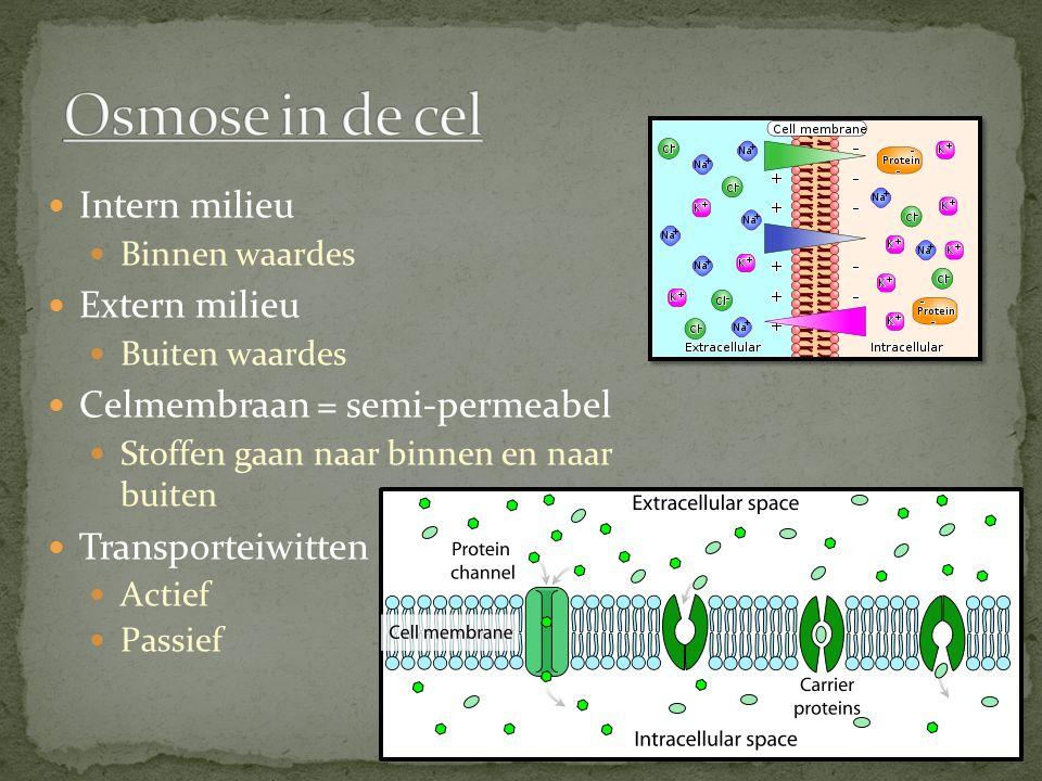 Intern milieu Binnen waardes Extern milieu Buiten waardes Celmembraan = semi-permeabel Stoffen gaan naar binnen en naar buiten Transporteiwitten Actie
