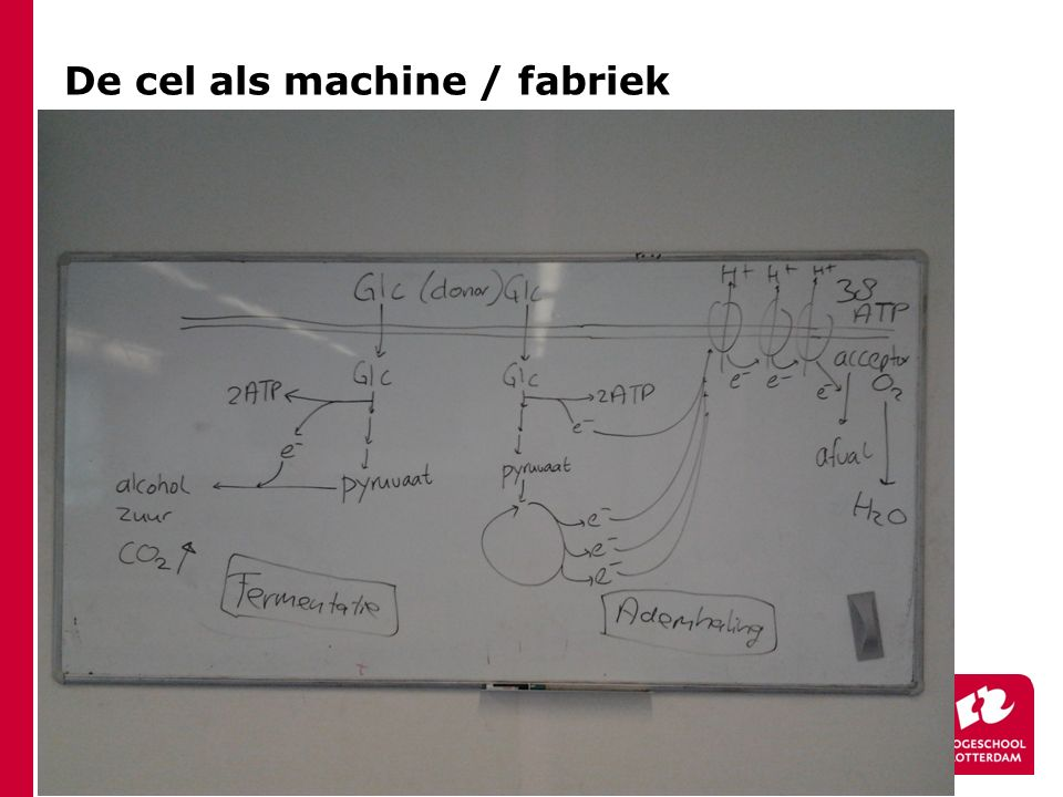 De cel als machine / fabriek