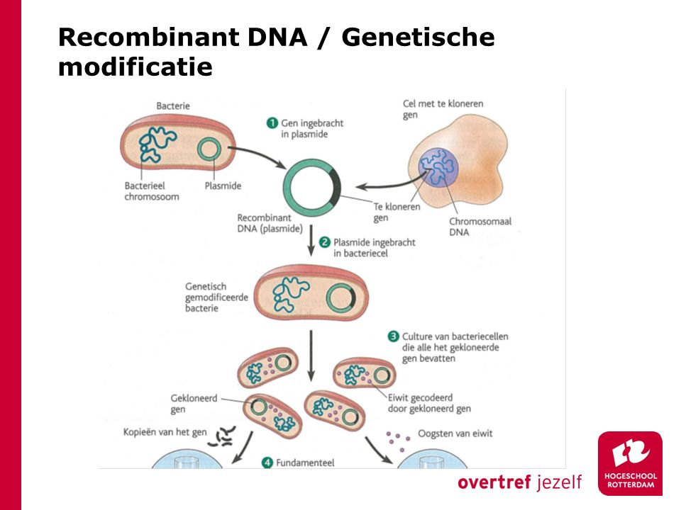 Recombinant DNA / Genetische modificatie
