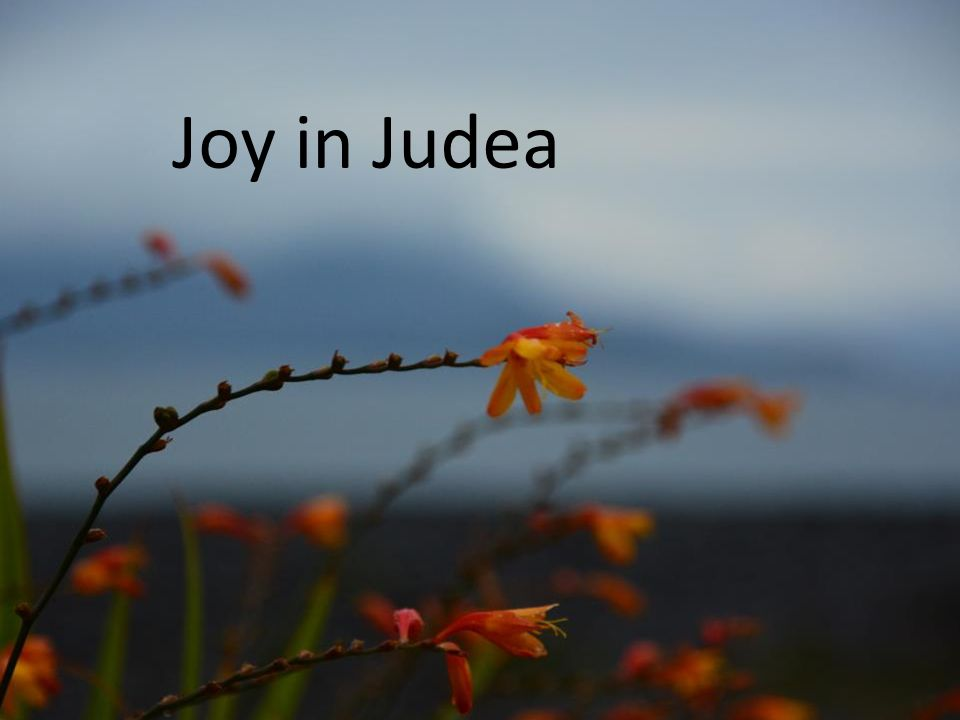 Samenzang: Komt allen tezamen, jubelend van vreugde: Komt nu, o komt nu naar Bethlehem.