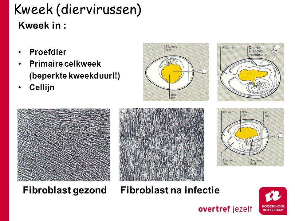Kweek (diervirussen) Kweek in : Proefdier Primaire celkweek (beperkte kweekduur!!) Cellijn Fibroblast gezondFibroblast na infectie