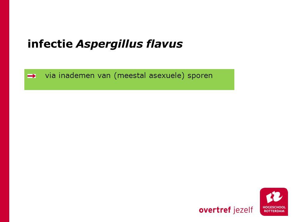 infectie Aspergillus flavus via inademen van (meestal asexuele) sporen
