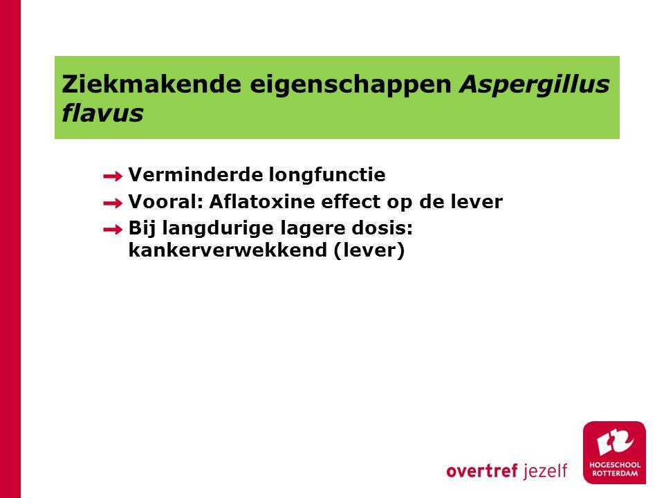 Ziekmakende eigenschappen Aspergillus flavus Verminderde longfunctie Vooral: Aflatoxine effect op de lever Bij langdurige lagere dosis: kankerverwekke