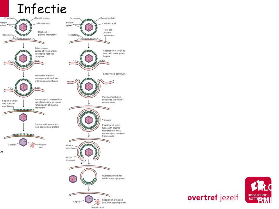 Plaque assay: # infectieuze deeltjes HLO BML Bacteriofaag Poliovirus (cellen gekleurd)