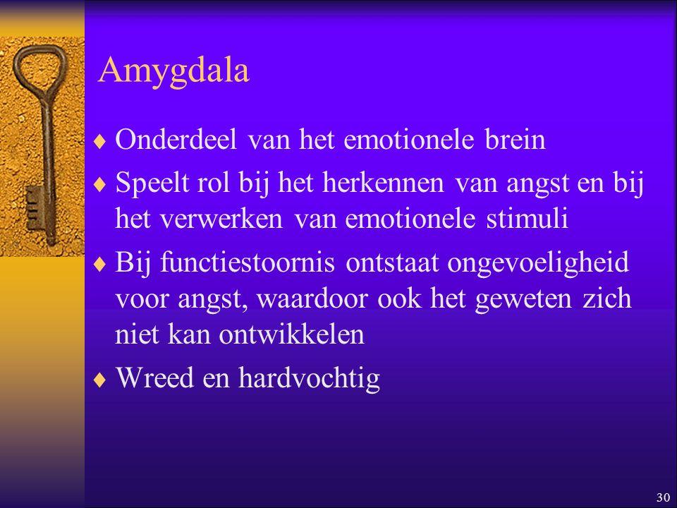 30 Amygdala  Onderdeel van het emotionele brein  Speelt rol bij het herkennen van angst en bij het verwerken van emotionele stimuli  Bij functiesto