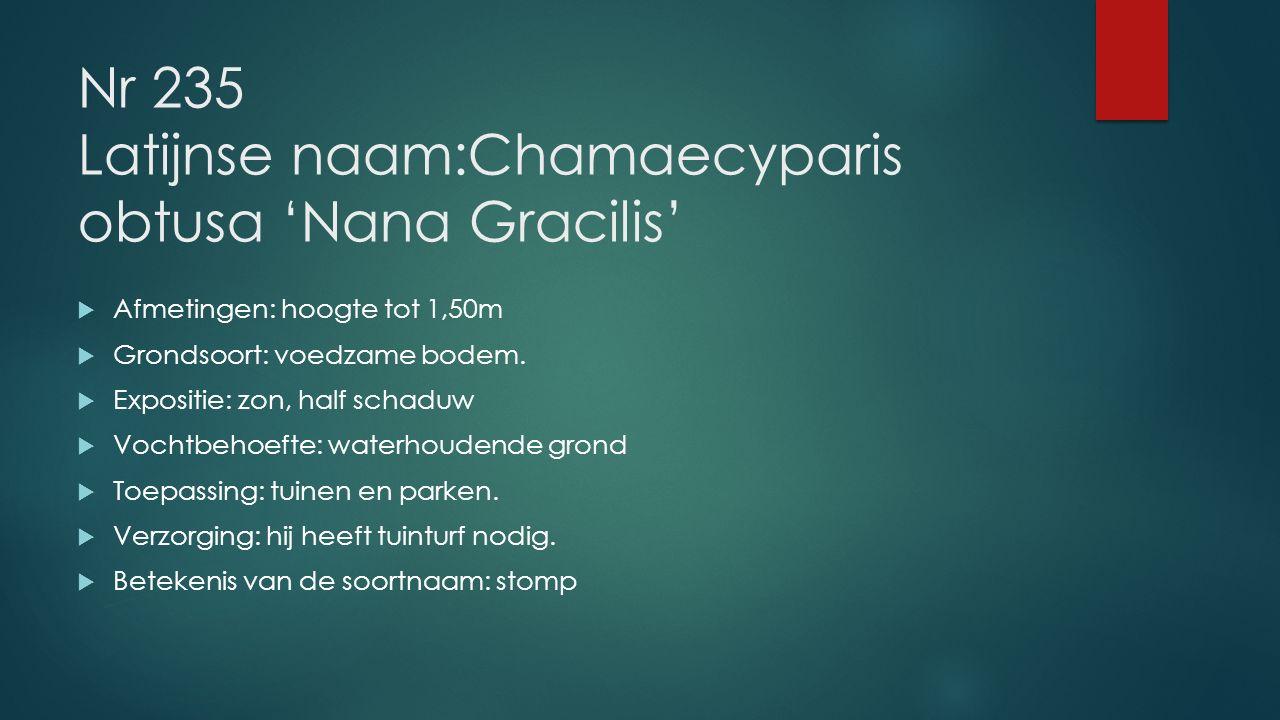 Nr 235 Latijnse naam:Chamaecyparis obtusa 'Nana Gracilis'  Afmetingen: hoogte tot 1,50m  Grondsoort: voedzame bodem.