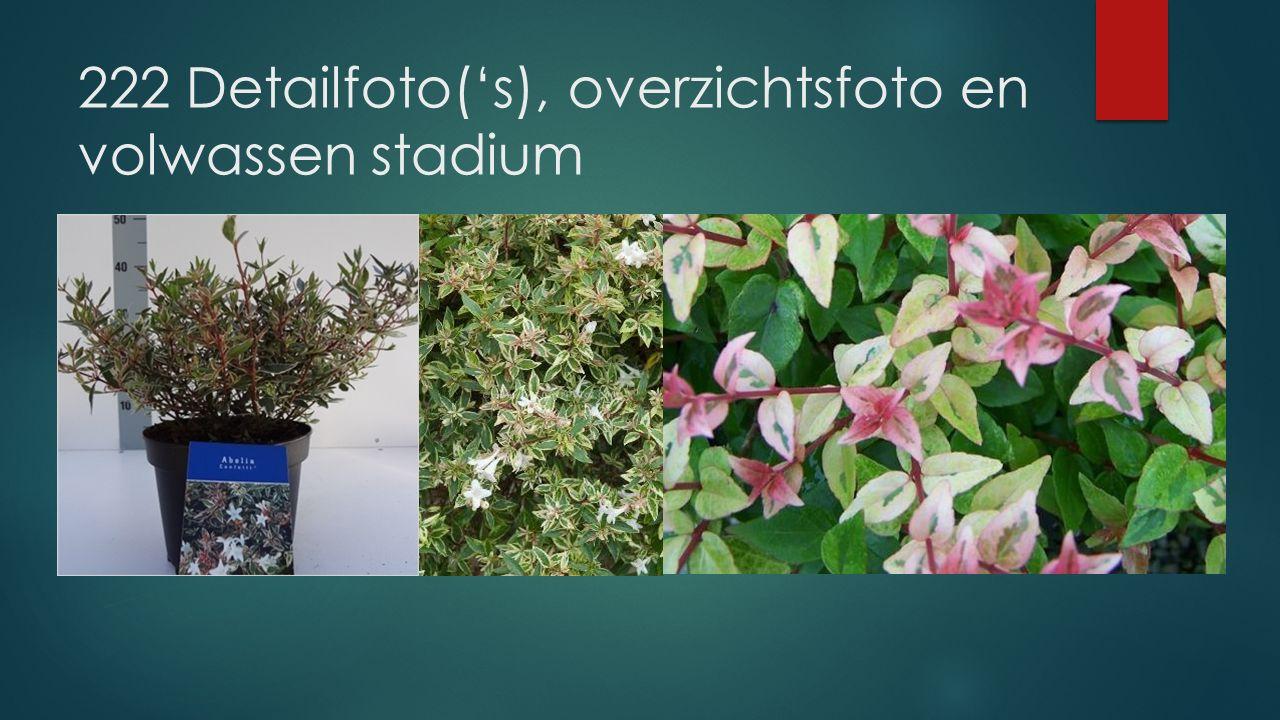 Detailfoto('s), overzichtsfoto en volwassen stadium