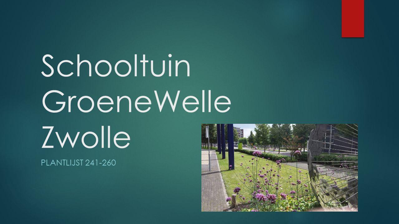 Schooltuin GroeneWelle Zwolle PLANTLIJST 241-260