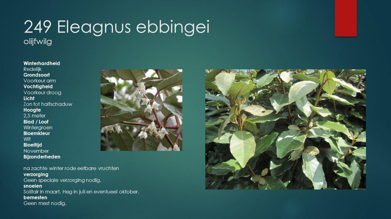 249 Eleagnus ebbingei olijfwilg Winterhardheid Redelijk Grondsoort Voorkeur arm Vochtigheid Voorkeur droog Licht Zon tot halfschaduw Hoogte 2,5 meter