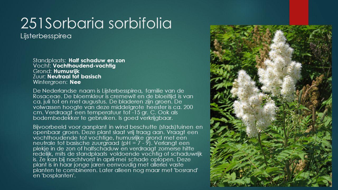 251Sorbaria sorbifolia Lijsterbesspirea Standplaats: Half schaduw en zon Vocht: Vochthoudend-vochtig Grond: Humusrijk Zuur: Neutraal tot basisch Winte
